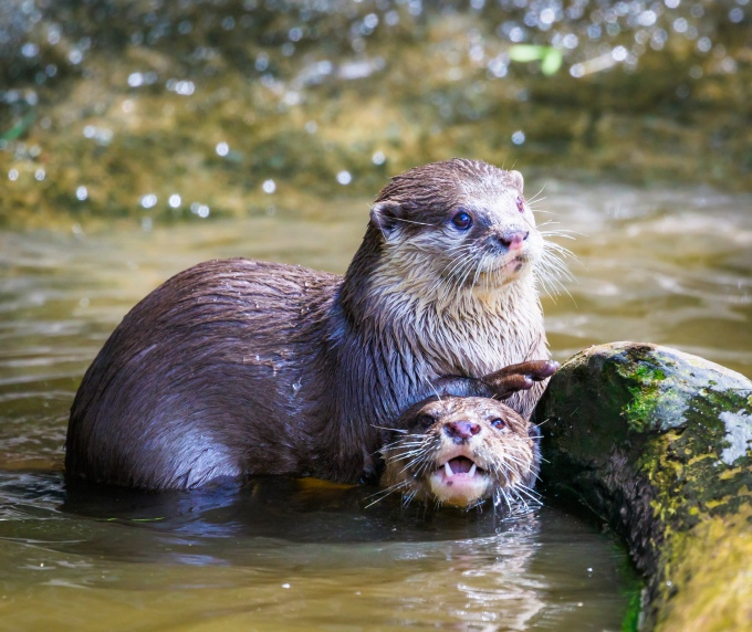 Otter Friends 2